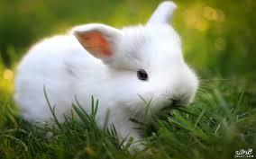 صورة صور حيوانات , اجمل الحيوانات الاليفة