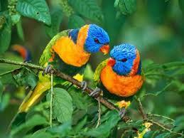 صورة صور بلابل , جمال طيور البلبل لا مثيل له