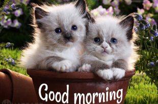 صورة شعر صباح الخير , افضل صور صباحية