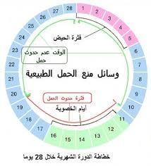 الايام المناسبة للحمل بعد الدورة الشهرية , معلومات عن الحمل