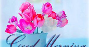 ورد صباح الخير , صور زهور صباحية مع عبارة صباح الخير