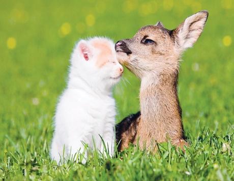 صورة شعر عن الصديق الغالي , امثلة عن الصداقة بالشعر