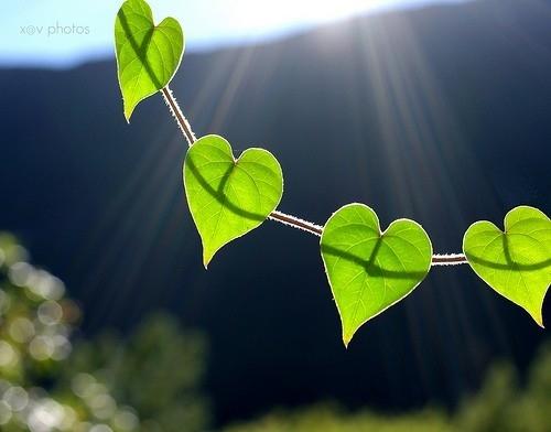 صورة احبك حبيبي , اعشقك يا قلبي