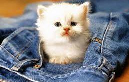 صورة اجمل صور قطط , صور لالطف الحيوانات