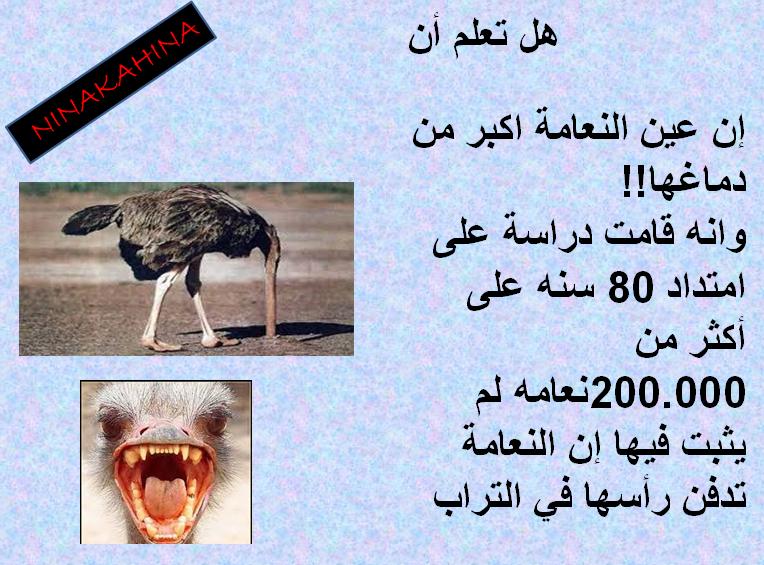 صورة هل تعلم عن الحيوانات , اغرب الحقائق عن الحيوانات