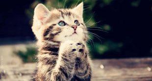 صورة صور قطط صغيرة , خلفية مميزة للاجهزة الذكية للقطط