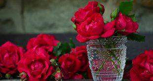 صور اجمل صور الورد , خلفيات للزهور تحفة جدا