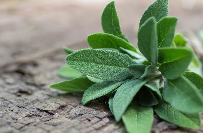 صور عشبة الميرمية , اهم فوائد واضرار استخدام عشبة الميرمية