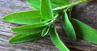 صورة عشبة الميرمية , اهم فوائد واضرار استخدام عشبة الميرمية