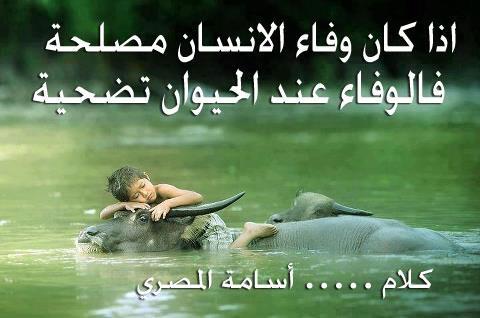 صورة اجمل ماقيل عن الوفاء , كلام مصور عن الوفاء