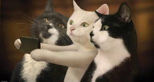 صورة قطط مضحكة , احلى قطة مهضومة