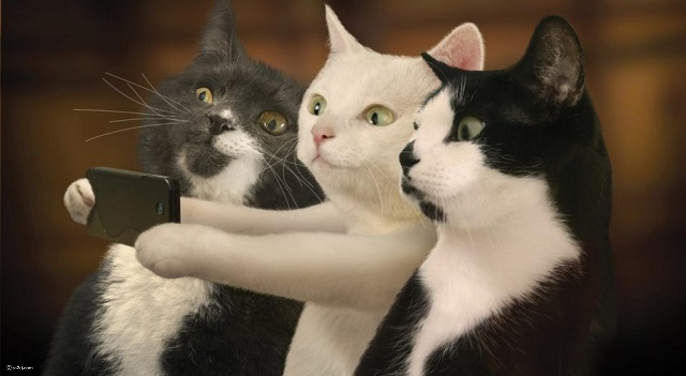 صور قطط مضحكة , احلى قطة مهضومة