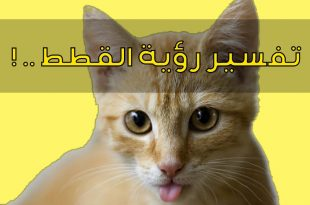 صور تفسير رؤية قطة في المنام , وجود قطة في الحلم
