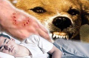 صورة تفسير رؤية الكلب في الحلم , الحلم بالكلب في المنام