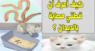 صورة علاج ديدان القطط , ما هو ديدان القطط؟
