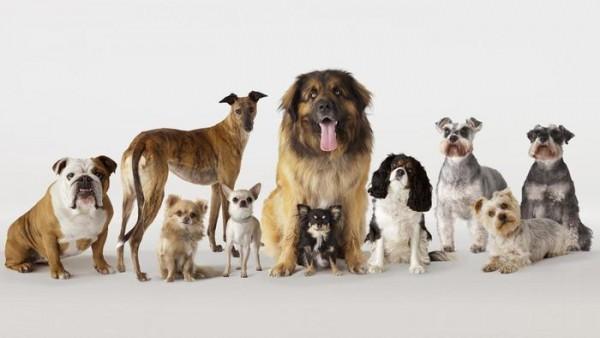 صور جميع انواع الكلاب , صفات الكلاب و انواعها