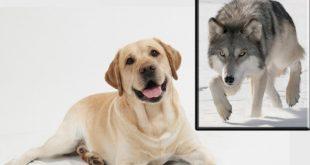 صورة جميع انواع الكلاب , صفات الكلاب و انواعها