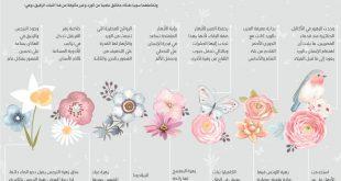 صور معلومات عن الورد , اعرف جمال الورد