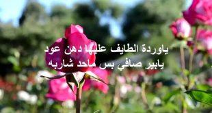 صورة شعر عن الورد , اجمل ما قيل عن الورد وجماله الطبيعي 👇