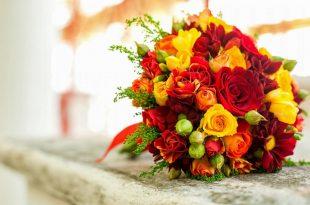 صورة تنزيل صور ورد , الورد وطبيعته الجذابة صور تجنن 👇