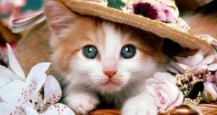 صورة صور قطط جميلة،ما اجمل القطط الجميله والرائعة