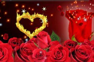 صورة صور ورد متحركه,واو ما اروع الورود وأشكالها الخلابه