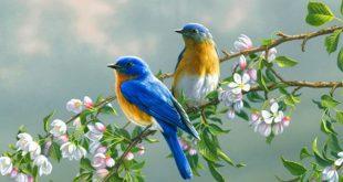 صورة صور طيور رائعة , ابداع الخالق تجدها فى الطيور
