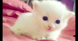 صورة اجمل القطط الصغيرة في العالم ,قطط مدهشة تجنن