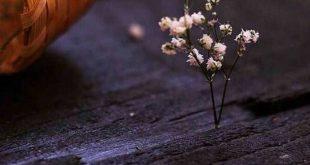 صورة اجمل خلفيات للواتس , اجمد واحلي خلفيات واتس تجنن 👇