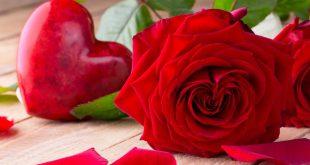 صورة صور لاجمل الورود , الورد وجماله الطبيعي الجامد جدا 👇