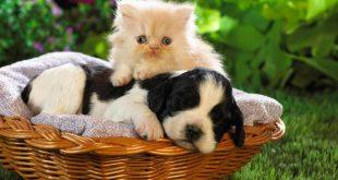 صورة صور قطط وكلاب , اجمد صور مختلفة للقطط والكلاب 👇