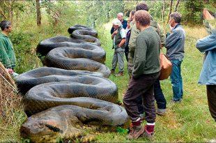 صورة اكبر ثعبان فى العالم,هتنبهر لو رأيت هذا الثعبان