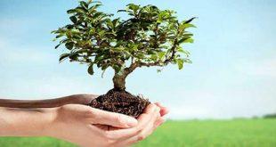 موضوع تعبير عن الشجرة , الشجر وطبيعته الخلابة وجمالها 👇