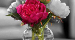 صورة صور اجمل زهور , اجمل واحلي زهور تجنن 👇